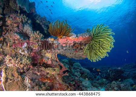 Amazingly beautiful underwater view with school of fishes, hard and soft corals. Healthy reefs of Nusa Penida, Indonesia.