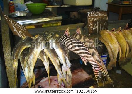 Amazon fish sold at market Fresh Brazilian fish - stock photo