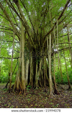 Amazon jungle tree - stock photo