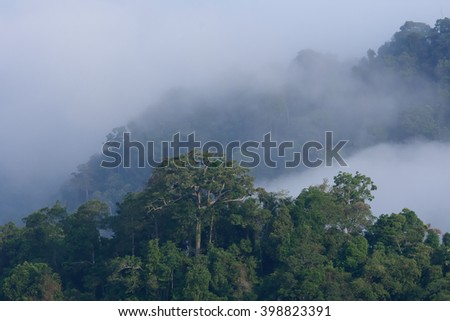 Amazon rain forest and mist background - stock photo