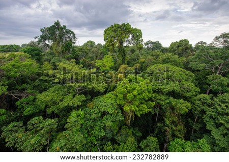 Amazon rainforest in Tambopata reserve, Peru - stock photo