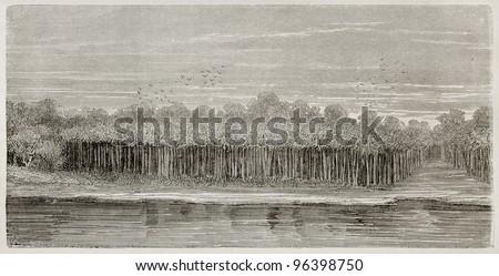 Amazon river bank vegetation: Moriche palms. Created by Riou, published on Le Tour du Monde, Paris, 1867 - stock photo