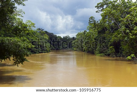 Amazonian river, the water brown with sediment, the rio Tiputini in Ecuador - stock photo