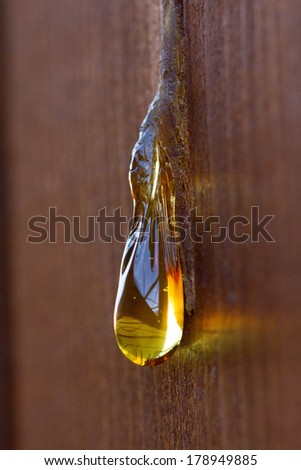 Amber drop - stock photo