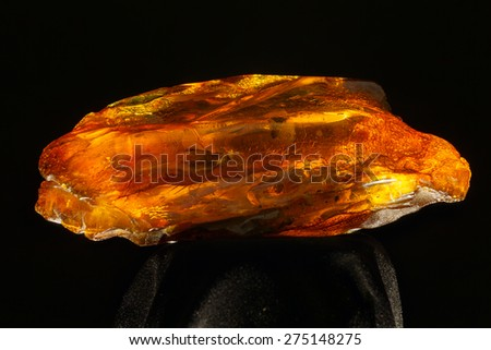 amber insects in the middle - stock photo