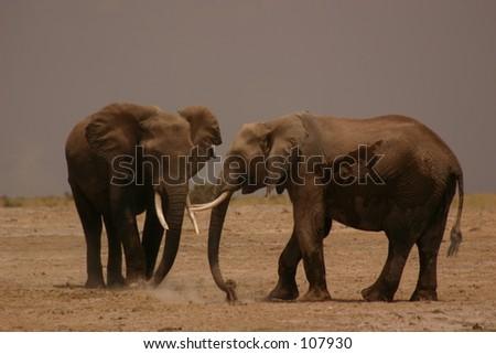 Amboseli elli boys 2,04 - stock photo