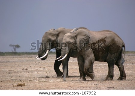 Amboseli elli boys 12,04 - stock photo