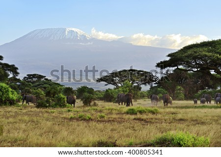 Amboseli National Park in the African savanna