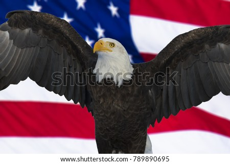 American bald eagle and flag, Digital composite