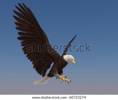 american bald eagle blue sky goes down - stock photo