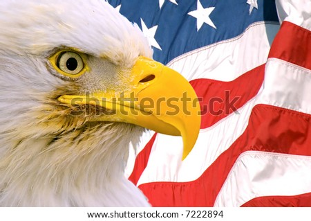 american bald eagle face superimposed over usa flag - stock photo