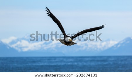 American Bald Eagle flies above the sea  - stock photo