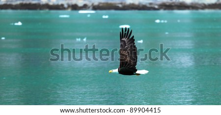 American Bald Eagle flies above the sea , Alaska, USA - stock photo