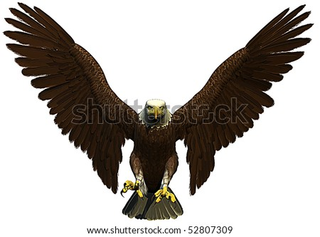 american bald eagle flying front - stock photo