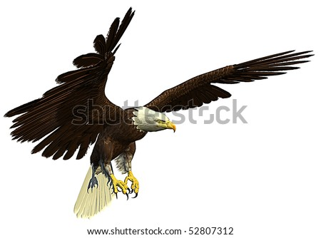 american bald eagle hunting - stock photo