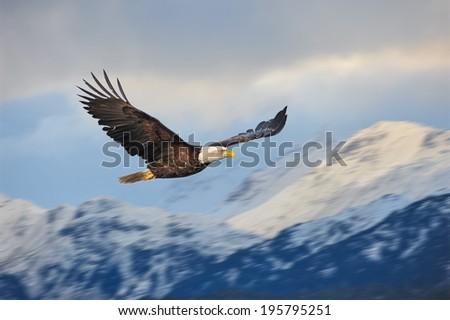 american bald eagle in alaska superimposed over alaskan coastal mountains - stock photo