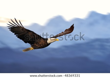 american bald eagle in flight against illustrated alaska mountains - stock photo