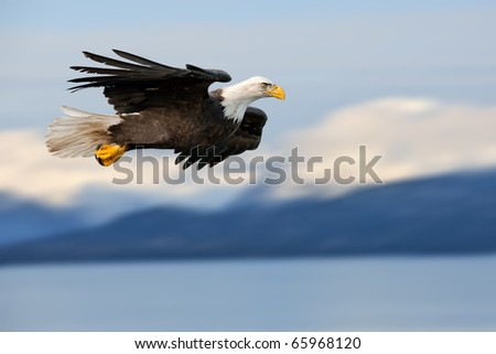 american bald eagle in flight superimposed over alaskan cook inlet and mountains at wintertime - stock photo