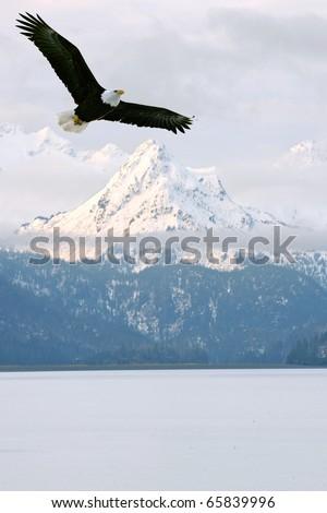 american bald eagle in flight superimposed over scene of alaska coastal mountain peaks in winter - stock photo