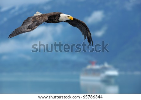 american bald eagle in flight superimposed over scene of alaska inside passage with cruise ship as illustration - stock photo