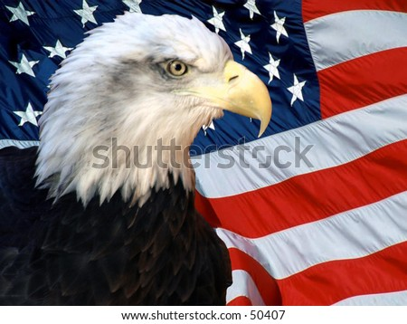 american bald eagle in-front of the american flag - stock photo