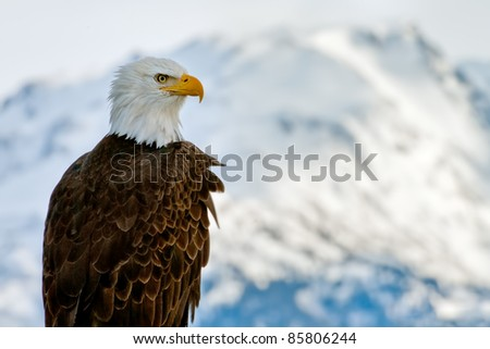 american bald eagle posing against alaska coastal mountains lit by winter sunset - stock photo