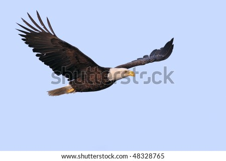 american bald eagle superimposed on light blue background
