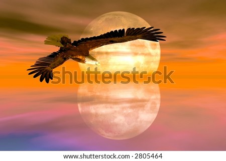 American Bald Eagle sweeping over the water - stock photo