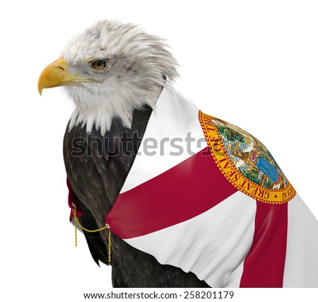 American bald eagle wearing the Florida state flag - stock photo
