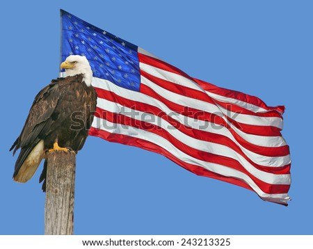 American Bald Eagle with American Flag - stock photo