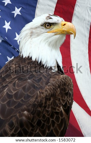 American bald eagle, with an American flag on the background - stock photo