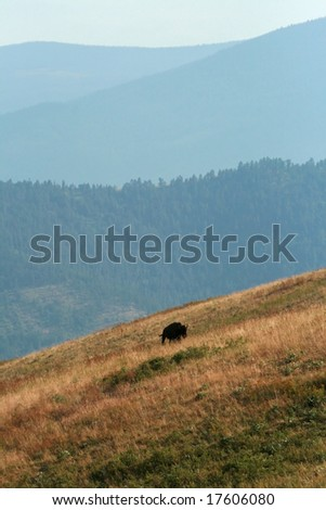 American bison (Bison bison) landscape, National Bison Range, Montana - stock photo