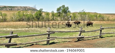American buffalo on the Oklahoma grasslands. - stock photo