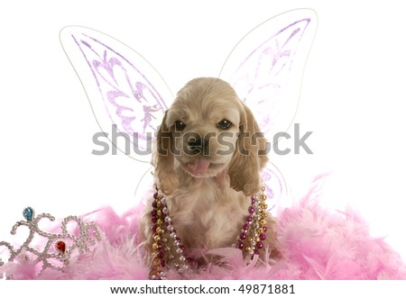 american cocker spaniel dressed up as an angel sticking tongue out at viewer on white background - stock photo