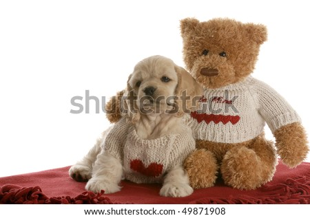 american cocker spaniel puppy and teddy bear cuddling with love on white background