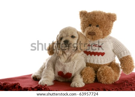 american cocker spaniel puppy being loved by stuffed teddy bear on white background - stock photo