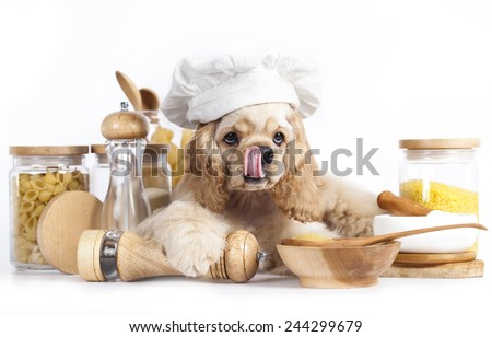 American Cocker Spaniel puppy in chef's hat - stock photo
