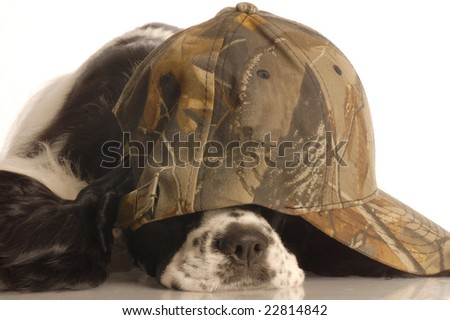 american cocker spaniel wearing camouflage ball cap - stock photo