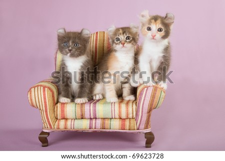 American Curl kittens on miniature sofa on pink background - stock photo