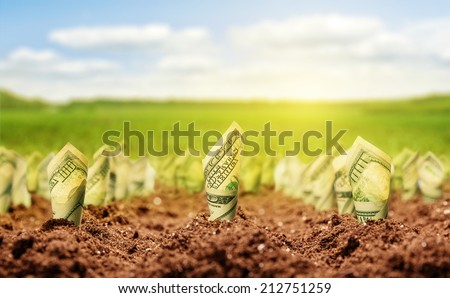 American dollars grow from the ground - stock photo