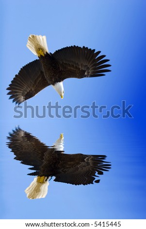 American eagle on blue sky - stock photo