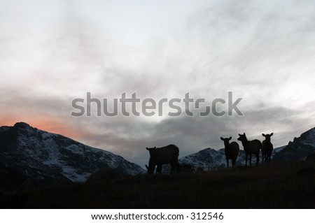 American elk are silhouetted on a rocky hillside.