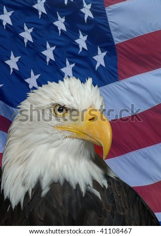 American Icon - Bald Headed Eagle - stock photo
