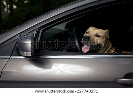 American stafford indoors the car like alarm system - stock photo