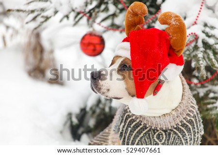 American Staffordshire Terrier dog breed in tree in a New Year's dress