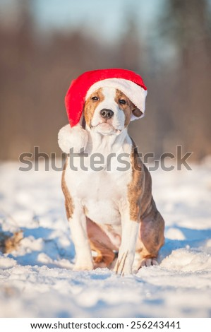 American staffordshire terrier puppy dressed in a christmas hat sitting outdoors in winter - stock photo