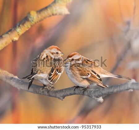 stock-photo-american-tree-sparrow-couple