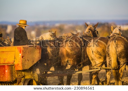 Amish farmer behind team of horse in field at sunset. - stock photo