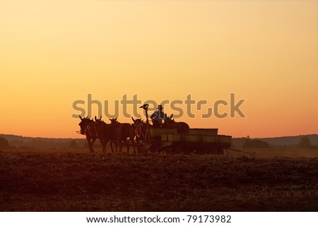 Amish farmer planting corn at sunset,Lancaster County,Pennsylvania - stock photo