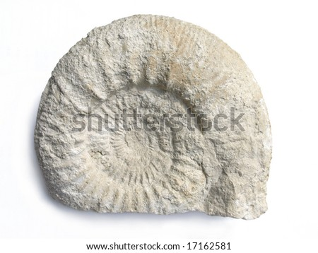 Ammonite fossil from Poland. - stock photo